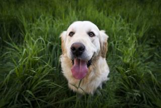 Http---www.lifeofpix.com-wp-content-uploads-2016-10-Life-of-Pix-free-stock-animal-dog-portrait-StefanStefancik